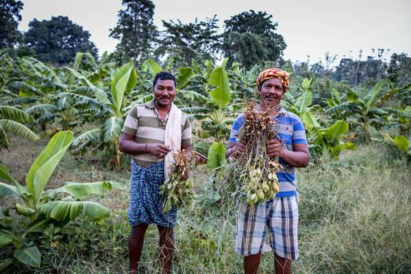 Integrated Village Development